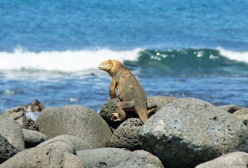 trekking_v_ekvadore_galapagosskie_ostrova_ekvador_ekvador