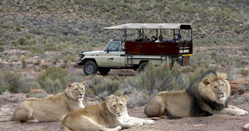 yuar_chudesa_afriki_vinnyy_tur_gastronomicheskiy_tur_ekskursionnyy_tur_safari
