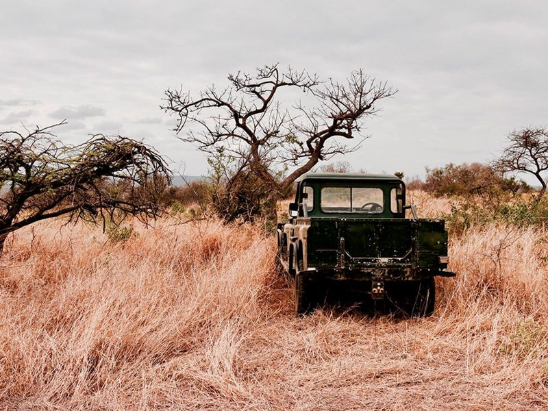 yuar_otdykh_v_san_siti_safari_v_pilanesberge_i_velikolepie_keyptauna_ru