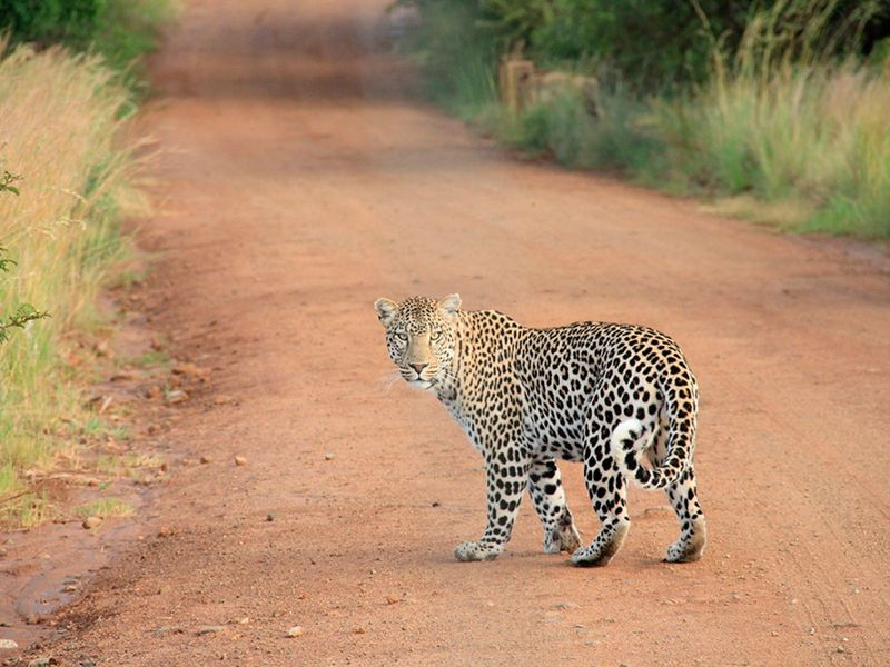 otdykh_v_san_siti_safari_v_pilanesberge_i_velikolepie_keyptauna_yuar_ru