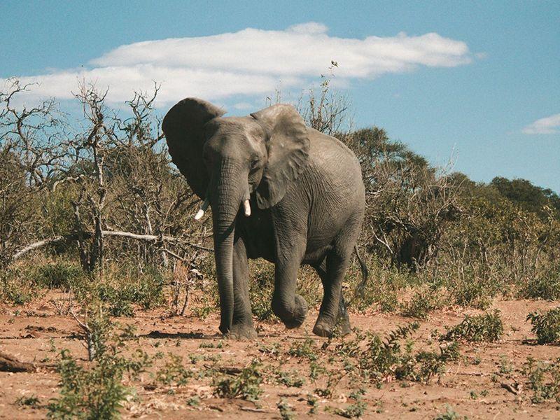 otdykh_v_san_siti_safari_v_pilanesberge_i_velikolepie_keyptauna_yuar_yuar