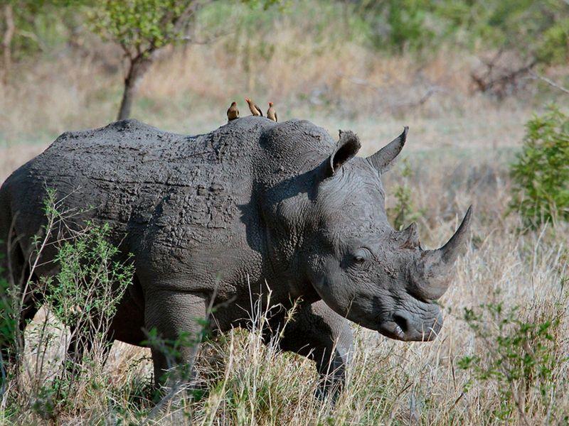 otdykh_v_san_siti_safari_v_pilanesberge_i_velikolepie_keyptauna_yuar_ekskursionnyy_tur_safari
