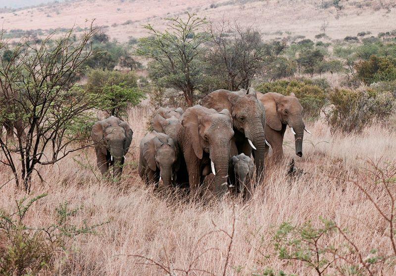 otdykh_v_san_siti_safari_v_pilanesberge_i_velikolepie_keyptauna_ekskursionnyy_tur_safari_yuar