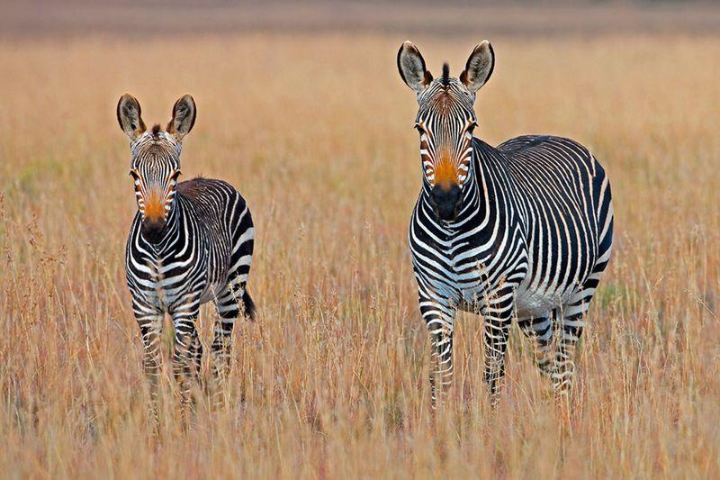 otdykh_v_san_siti_safari_v_pilanesberge_i_velikolepie_keyptauna_ru_yuar