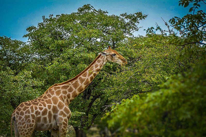 namibiya_i_yuar_ot_vindkhuka_do_keyp_tauna_namibiya_yuar_ru