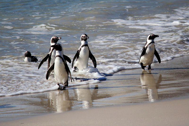 avto_tur_trekking_tur_fototur_ekskursionnyy_tur_dzhip_tur_ekspeditsiya_namibiya_yuar_namibiya_i_yuar_ot_vindkhuka_do_keyp_tauna