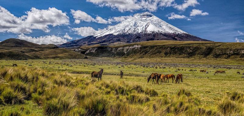 ekvador_ekvador_dalnyaya_amazoniya_i_andy_ekvador
