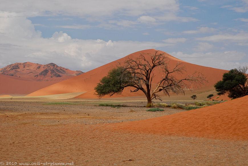 Désert du Namib 2008