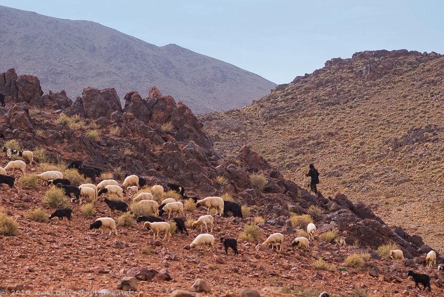 Maroc Jebel Sahro 2010