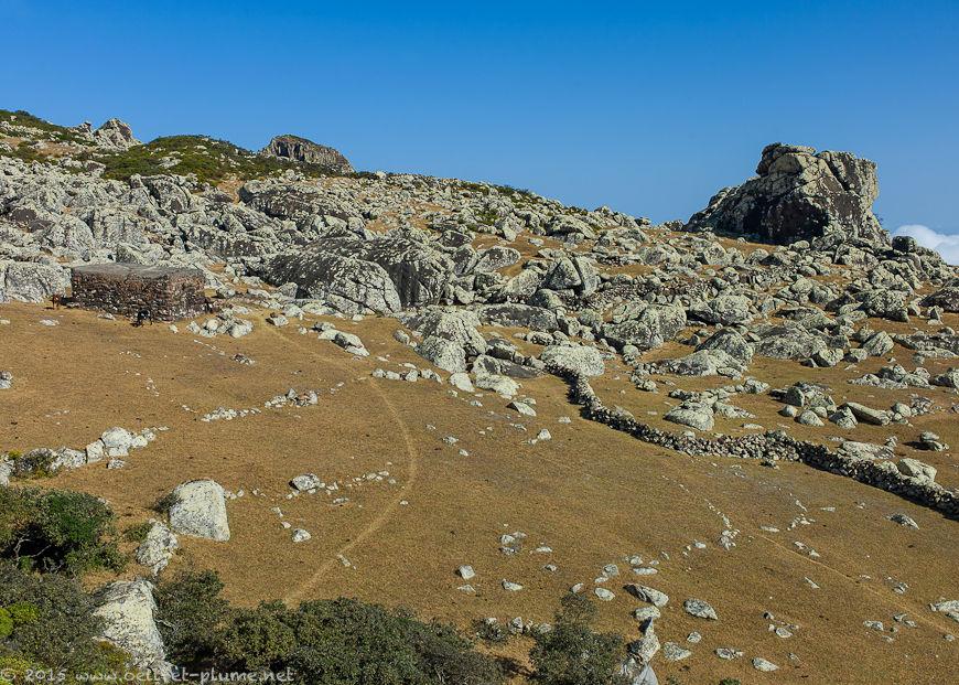 Socotra 2015