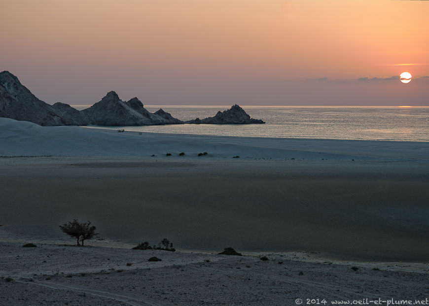 56 Socotra Dragon 2014