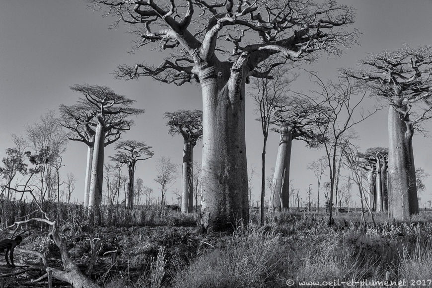 Madagascar 2017