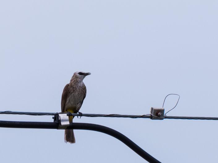 Bird Photography KL 2020