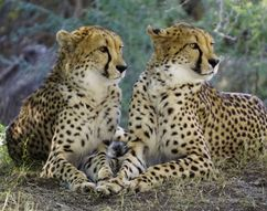 South Africa Holidays packages 8