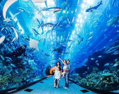 Abu Dhabi Holidays packages 6