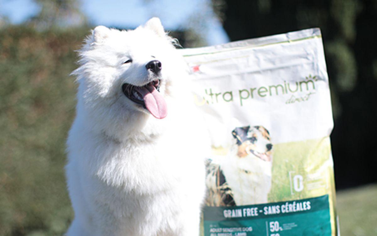Chien blanc à poils longs assis devant un sac de croquettes sans céréales d'Ultra Premium Direct