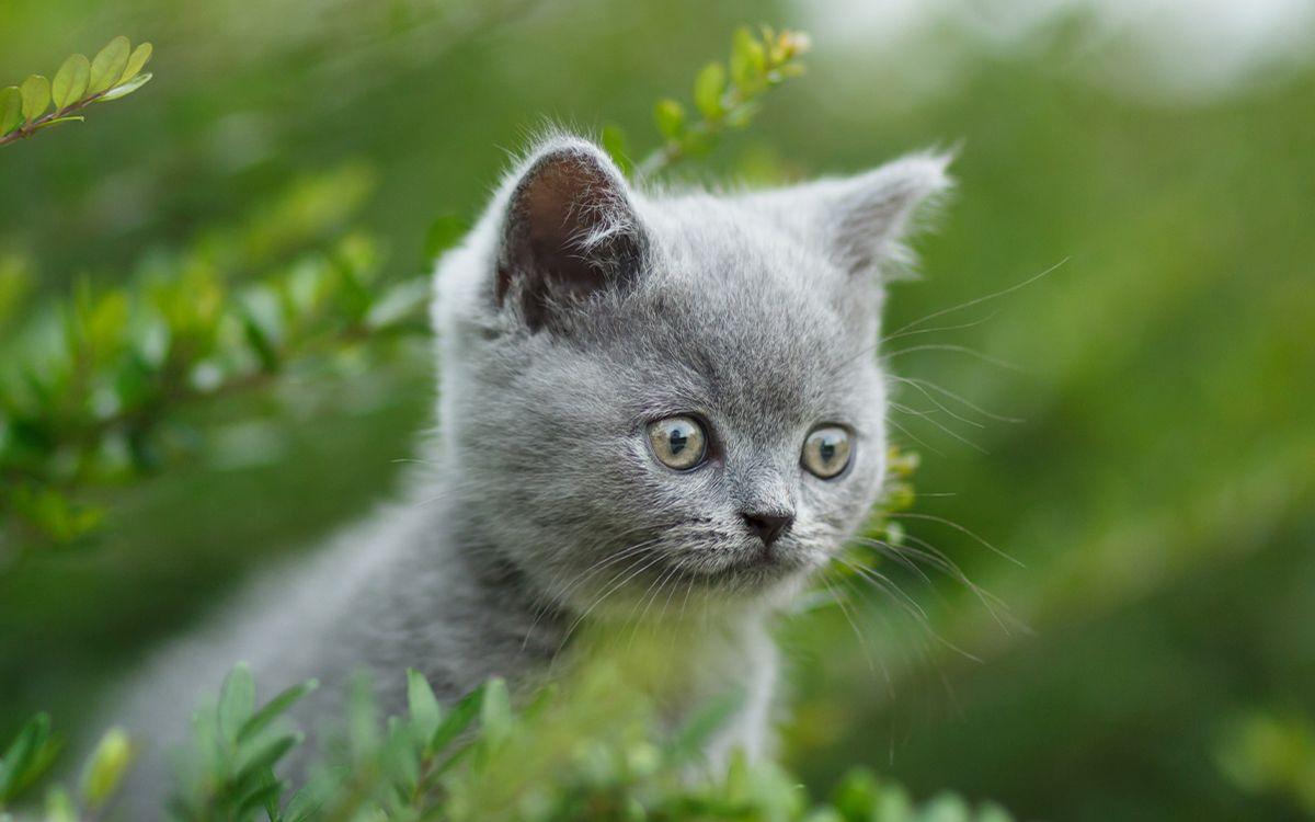 Un chaton en plein air, dans la nature