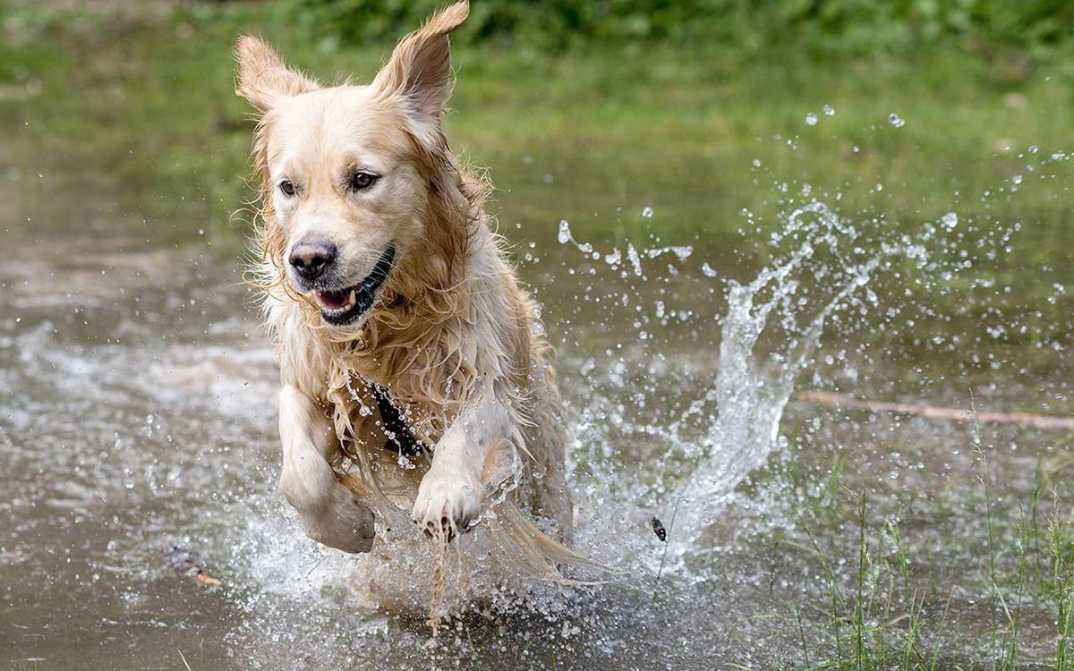 Un chien patauge dans l'eau lors d'une canicule